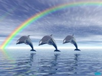 19972d1228120542-nature-wallpaper-dolphine-456