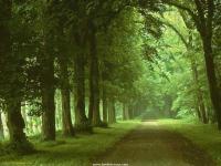 nature wild01