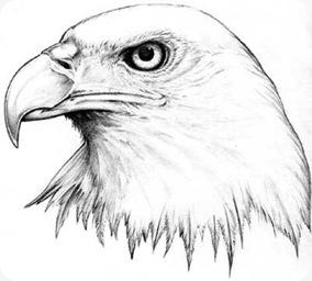 eagle-08