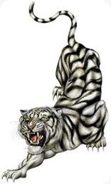tiger-08