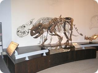 Pachyrhinosaurus_Royal_Tyrell