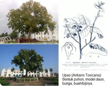 Pohon Upas